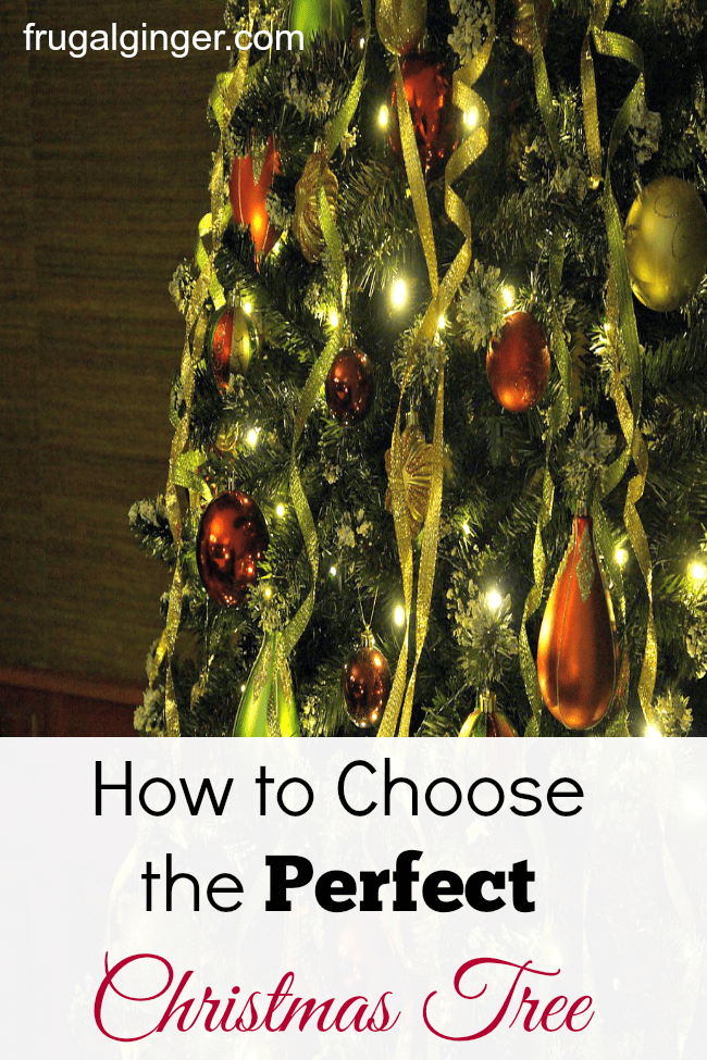 How to choose the perfect christmas tree the frugal ginger How to dress the perfect christmas tree