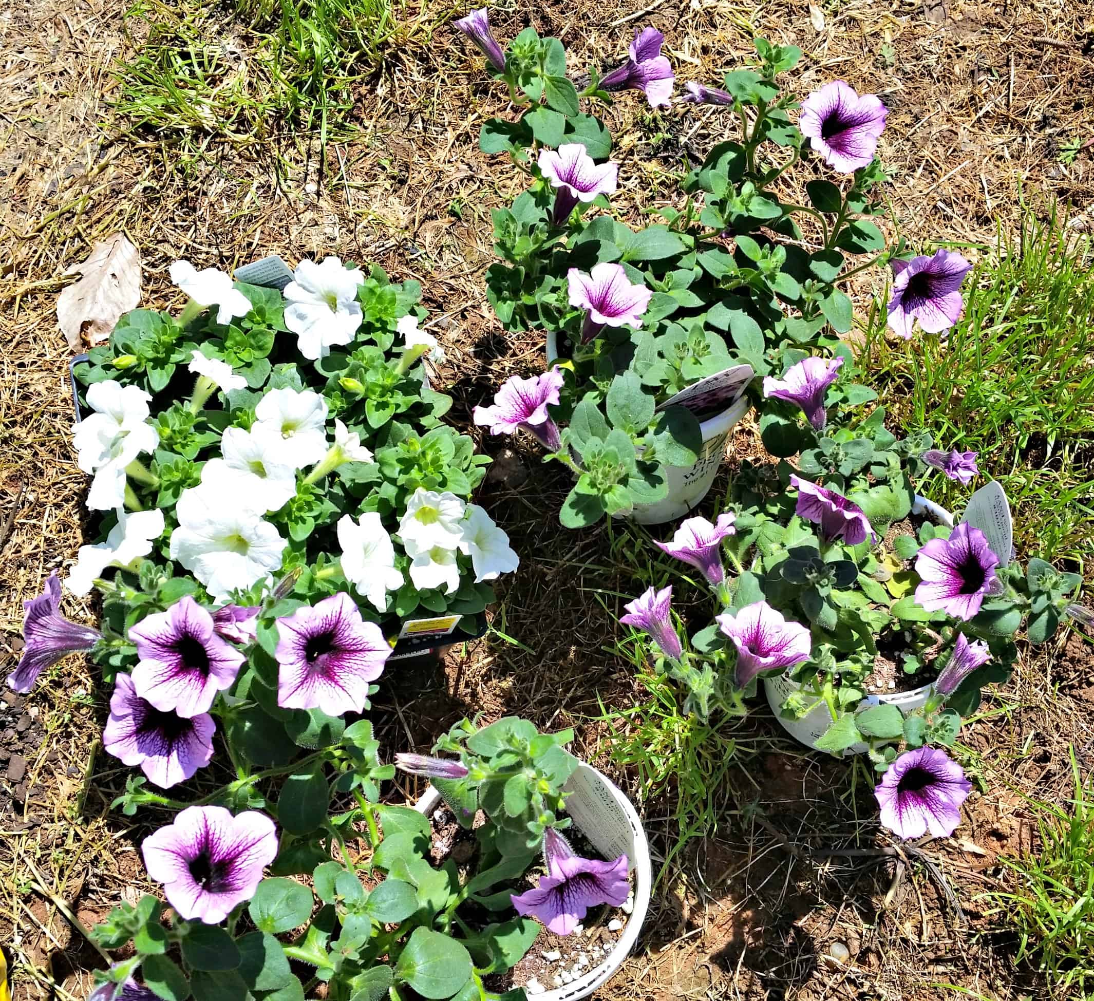 Grow Beautiful Plants With Plantopia Hanging Baskets Mothersday