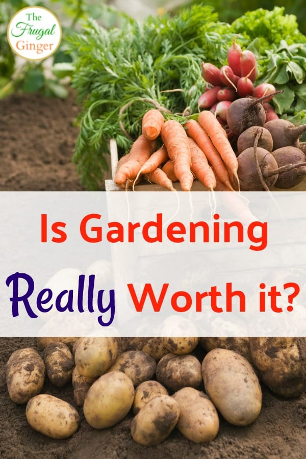 If you are a beginner gardener, you may be wondering if you can save money with a garden and if it is worth it to start one in your backyard. Use these tips to find the right plants and vegetables to make it worth your time and effort even if you are on a budget.