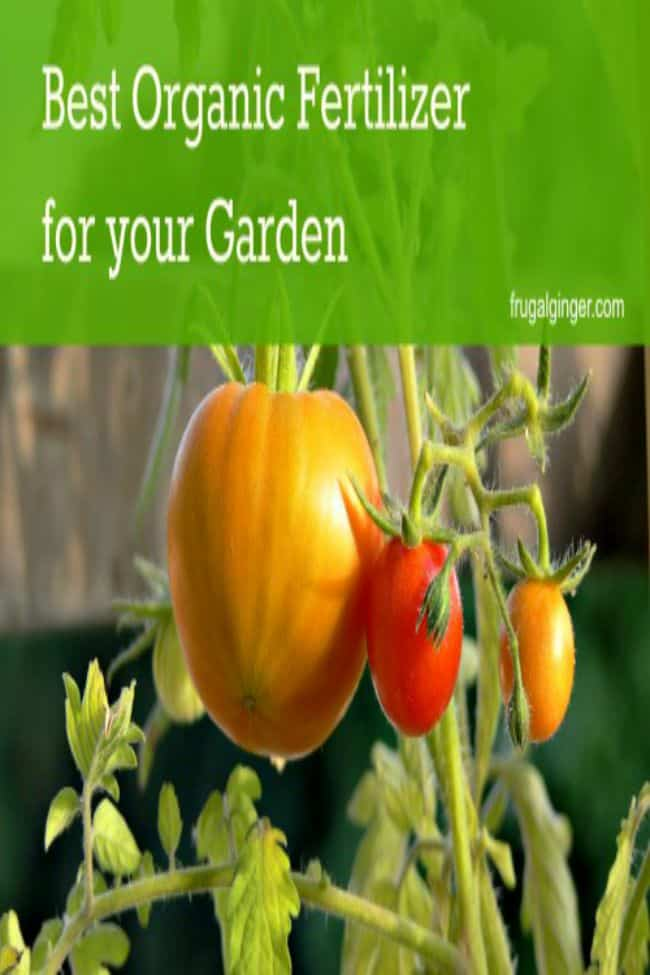 The best organic fertilizer to help you have a happy and healthy garden.