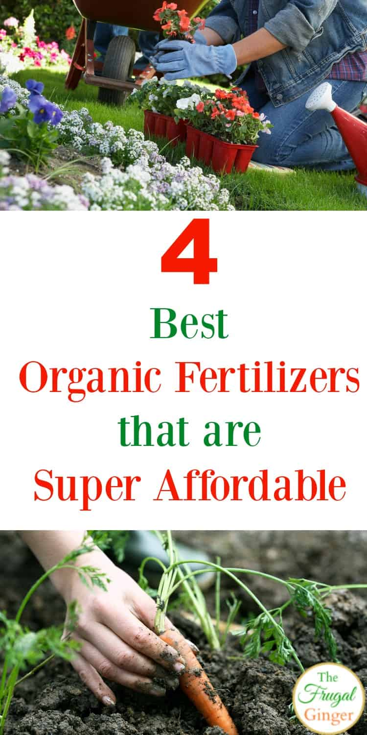 Using organic fertilizer for your garden is a much healthier option for your plants, vegetables, and flowers. These are my favorite all natural and organic fertilizer ideas because they are effective and frugal. Start organic gardening on a budget with these tips.