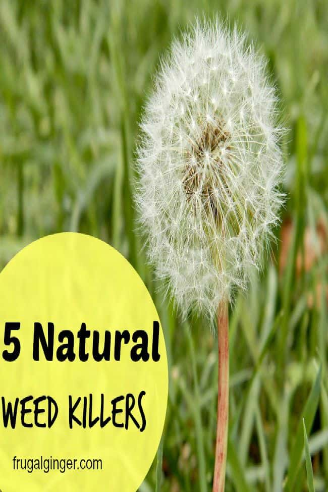 5 natural weed killers for your yard and garden. Some of them are free!