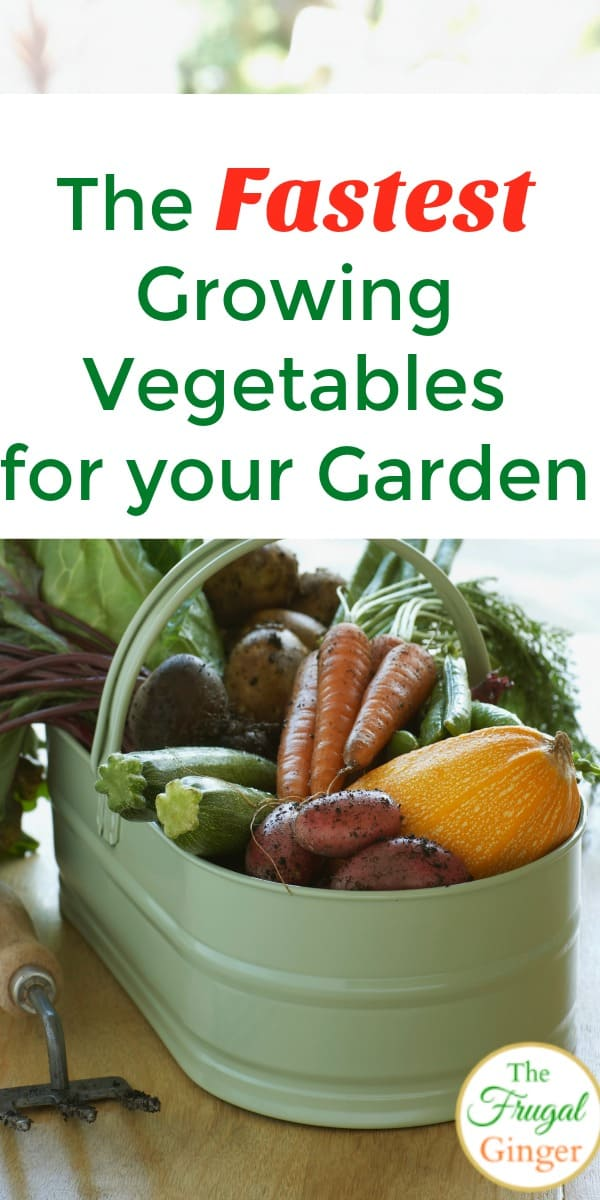 These are the fastest growing plants for your backyard vegetable garden. This is a great way for beginner gardeners to enjoy the harvest even quicker. These gardening for beginner tips will put homegrown produce on your table faster.