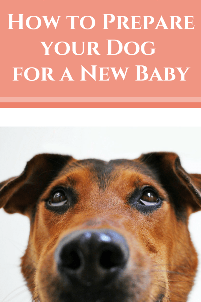 Learn what to do to prepare your dog for a new member of the family.