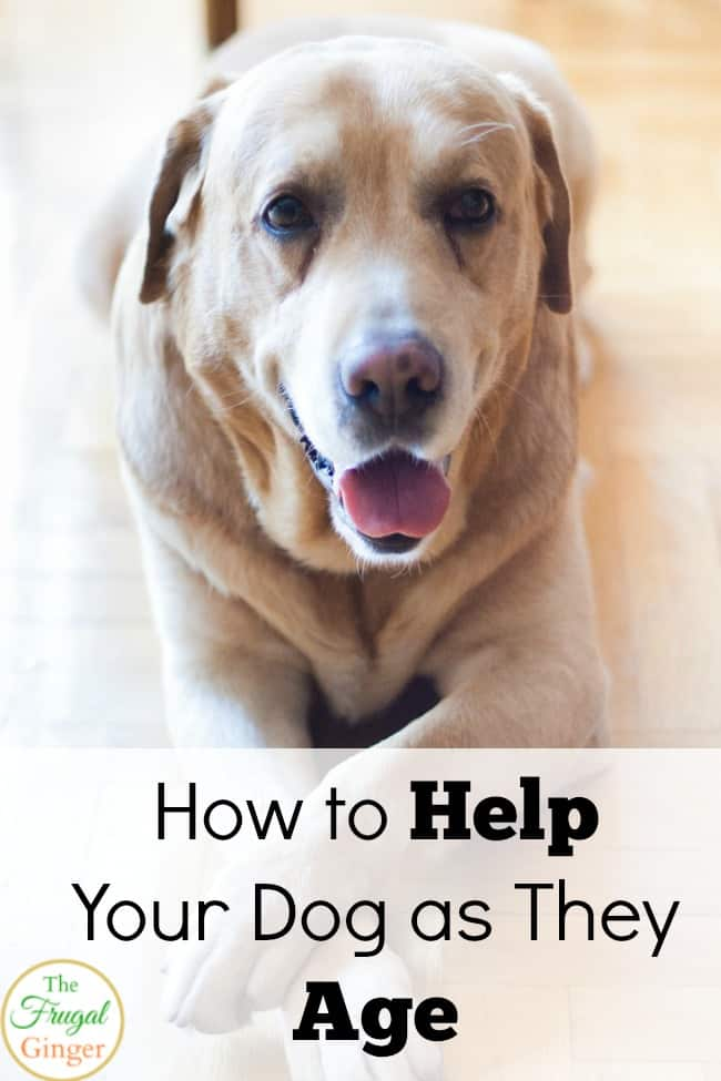help your dog as they age