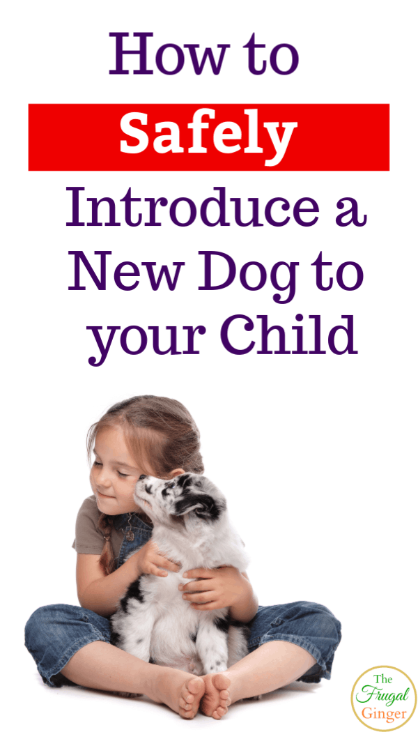 Parents should earn how to safely introduce a new dog to your child. Dog safety tips for kids to use at home or on the go. Perfect for families adopting a new pet.