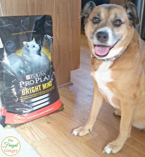 When Should Dogs Start Eating Adult Food