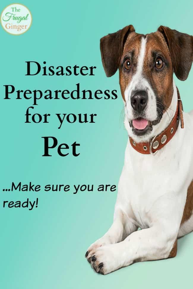 disaster preparedness for your pet