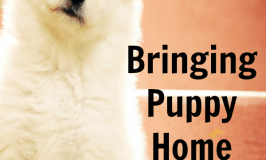 Bringing Puppy Home: How to Survive the First Month