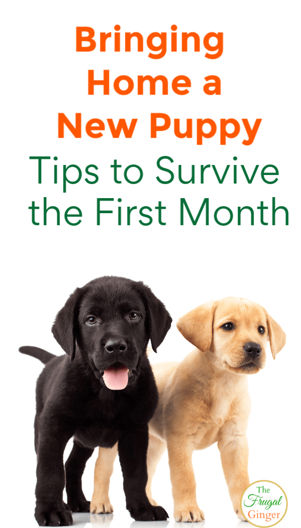 Use these bringing home a new puppy tips and ideas to make life easier on the entire family. What every new dog owner needs to know about pet care and having a new furry friend in the house.