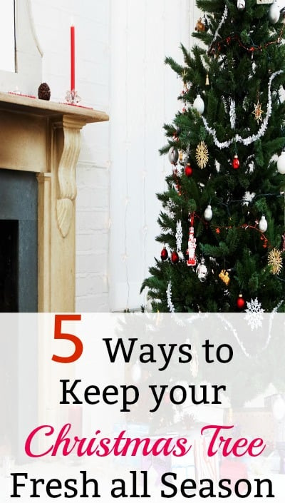 Use these tips to preserve your Christmas tree and keep it fresh all season long. Easy ideas to make your Christmas tree last longer.