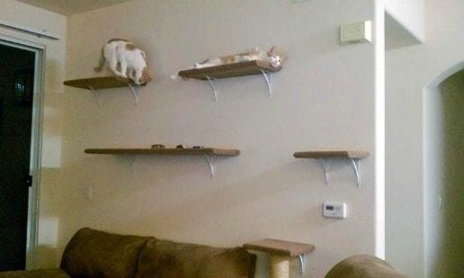 hanging cat tree
