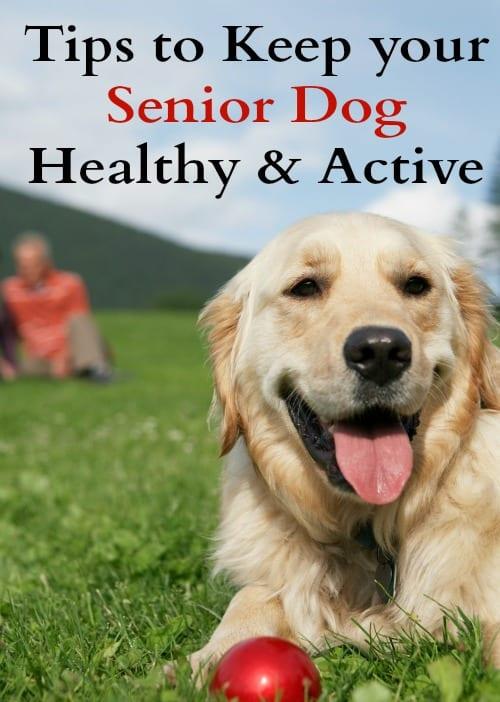 senior dog / healthy dog / dog owner tips and tricks