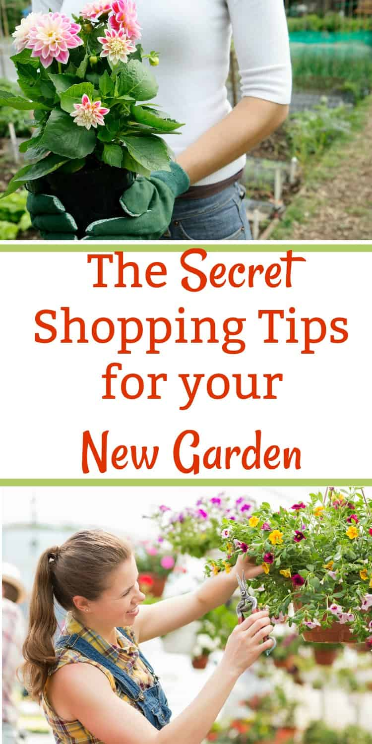 Gardening for beginners can be overwhelming the first time you go shopping at a nursery. These easy tips and ideas will help you start a beautiful backyard garden for your home even if you are on a budget.