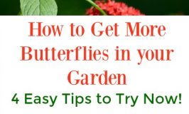How to Get More Butterflies in your Garden: 4 Easy Tips to Try Now