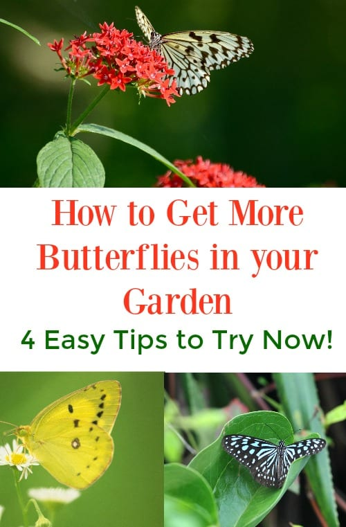 Want to learn how to make a perfect butterfly garden that will attract butterflies to your backyard? These DIY ideas will show you the best plants and flowers to use as well as how to make a welcoming environment to get more butterflies in your garden.