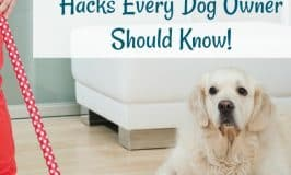 How to Keep a House Clean with Pets: Hacks Every Dog Owner Should Know