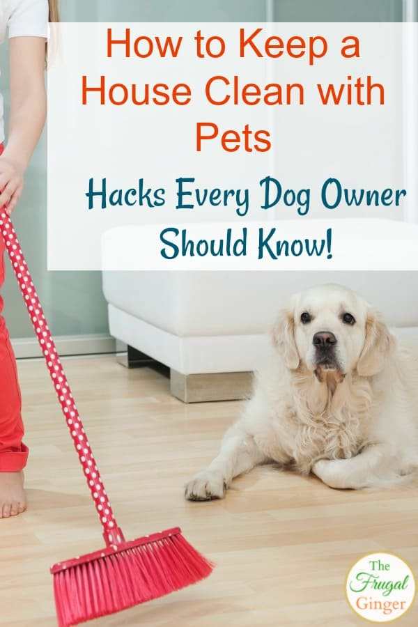 how to keep a house clean with pets hacks every dog owner should know. Black Bedroom Furniture Sets. Home Design Ideas