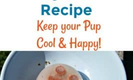 Easy Frozen Dog Treat Recipe: Keep your Pup Happy & Cool!