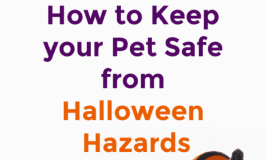 Keep your Pet Safe on Halloween: Hazards you Should Look out For