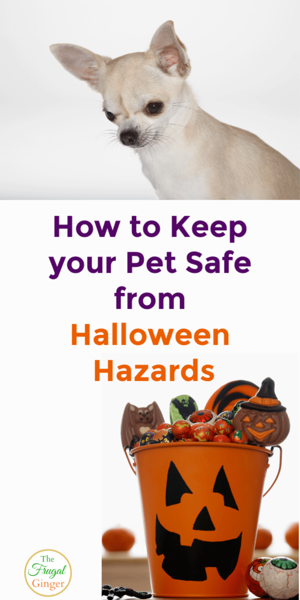 Keep your pet safe on Halloween with these safety tips for both dogs and cats. Take care of all of the hazards for a fun holiday for everyone.