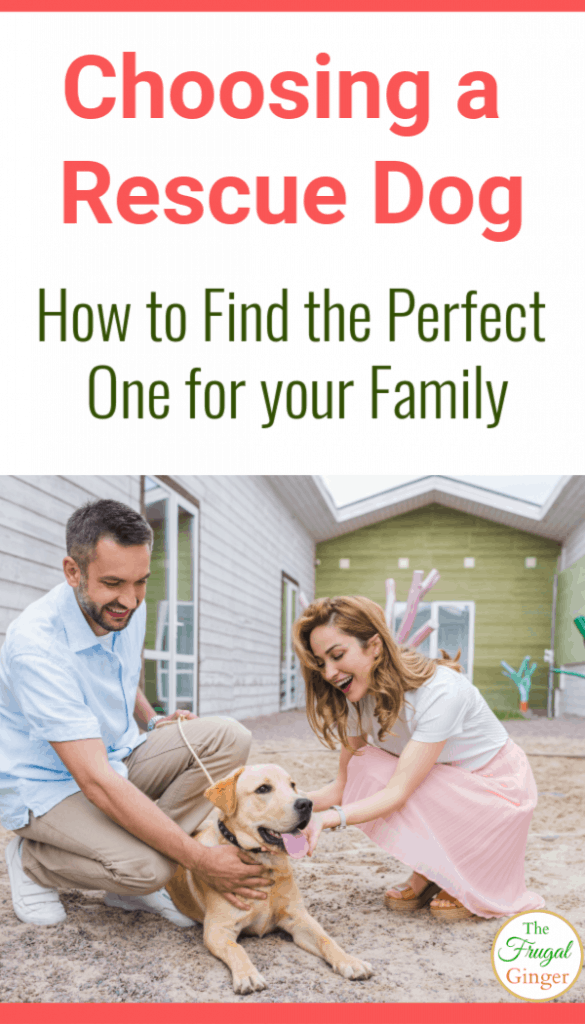 If you are going to be adopting a shelter dog soon, make sure you use these tips when choosing a rescue dog to find the perfect one for your family. Awesome ideas to keep in mind including behavior, age, and breed.