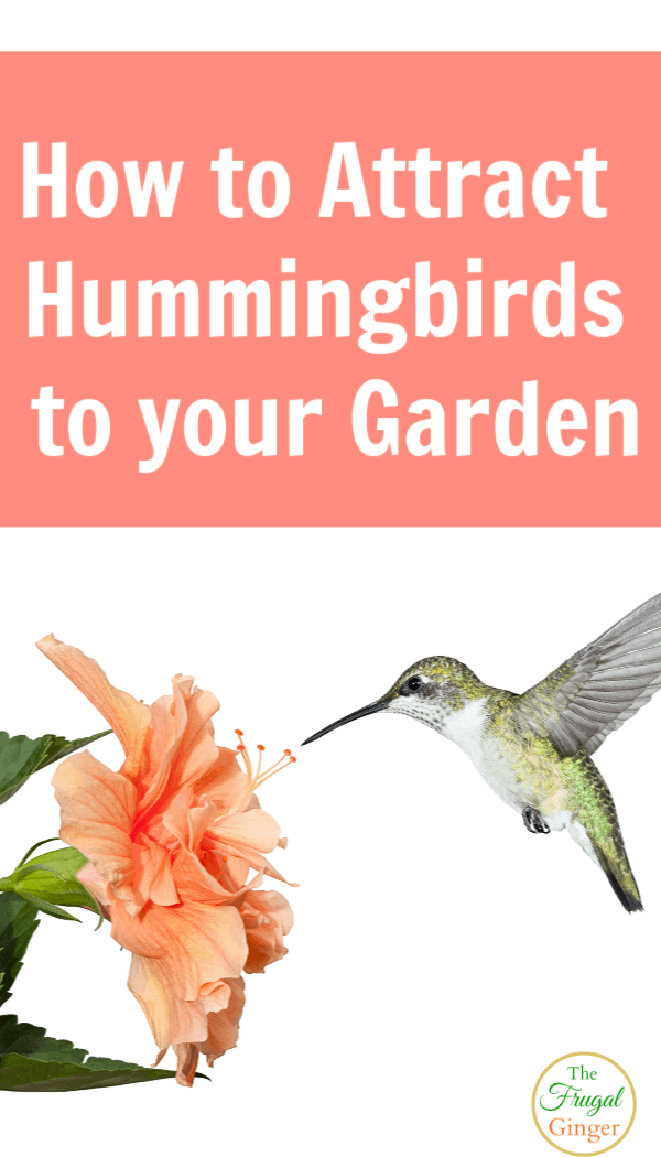 Attract hummingbirds to your garden with these tips and ideas. Learn how to make your backyard perfect for hummingbirds with the right flowers and environment.